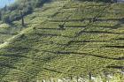 Intensificazione sostenibile dell'agricoltura. Convegno nazionale a Bolzano